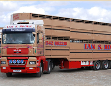 ,Livestock Haulage - MAN with Livestock Trailer at Dingwall Auction Mart